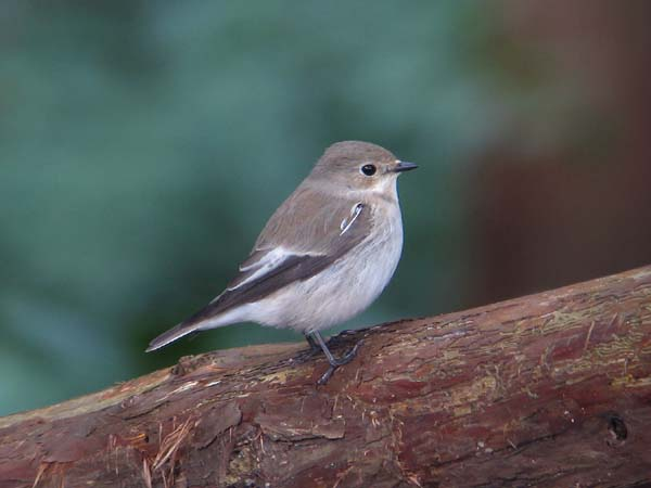 三神峯公園 2006/10/26-30: 鳥が大好き!